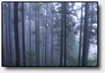 Forest in fog.png